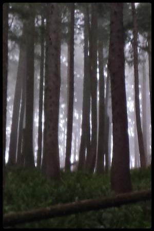Neahkanie_forest