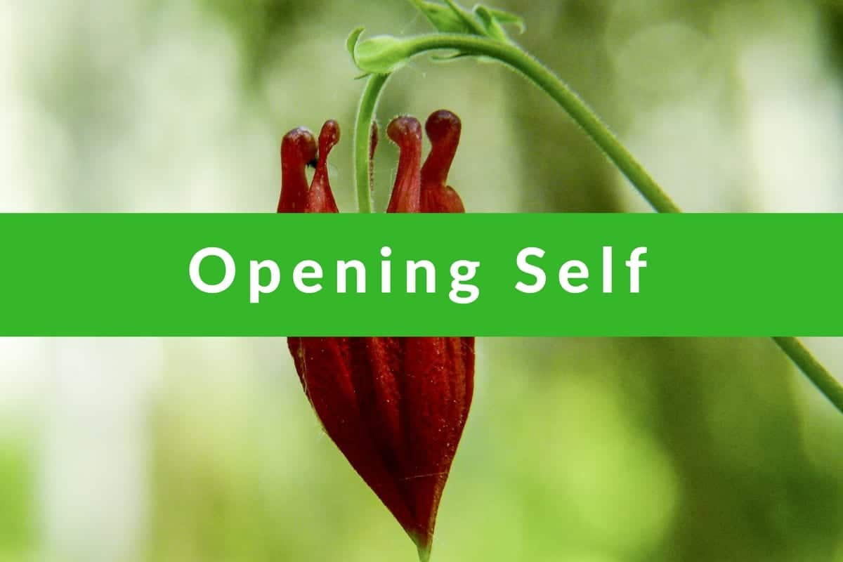 Affirmations for Opening Self by Cheryl Marlene