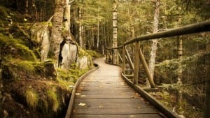 The Spiritual Importance of Beginners Mind by Cheryl Marlene