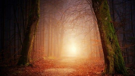 The Spiritual Art of Observation by Cheryl Marlene