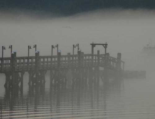A Cold Fog