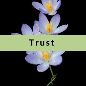 Best Affirmations for Trust by Cheryl Marlene